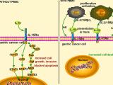 肿瘤细胞表达的IL-15Rα对胃癌的进展和免疫控制具有拮抗作用,并且在EBV阳性胃癌中受表观遗传调控