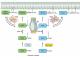 癌症中的RAS和RHO家族GTPase突变:不同母亲的双胞胎儿子?
