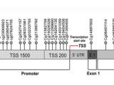 线粒体GRIM-19缺陷通过NRF2-HO-1环通过致癌ROS-NRF2-HO-1轴促进胃癌转移