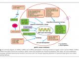 胃癌中的非编码RNA:对耐药性的影响