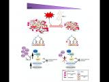 靶向MAD2调节人胃癌细胞系的干性和肿瘤发生